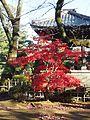 Gotokuji Temple (24527067424).jpg