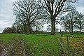 Grass and oaks - geograph.org.uk - 1779425.jpg