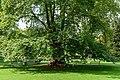 Graz (36602177391).jpg