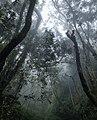 Great outdoors 07.jpg