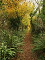 Green Lane below Windmill Hill - geograph.org.uk - 1050410.jpg