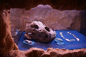 Pulfero - Image: Grotta San Giovanni d'Antro 0904 3