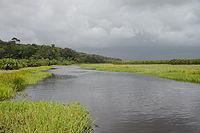 phtographie d'un marais, où l'eau et la végétation aquatique se partagent l'espace