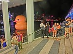 HK TST night Harbour City front stairs June-2013 view Rubber Duck.JPG