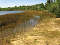 Habitat of Semiardistomis viridis (Say) at Grassy Waters Preserve, West Palm Beach, Florida, USA - ZooKeys-210-019-g018.jpeg