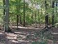 Hambach forest 53.jpg