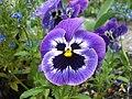 Happy Flower (86241867).jpeg