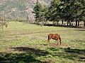 Haras Sausalito. - panoramio - R.A.T.P. (1).jpg