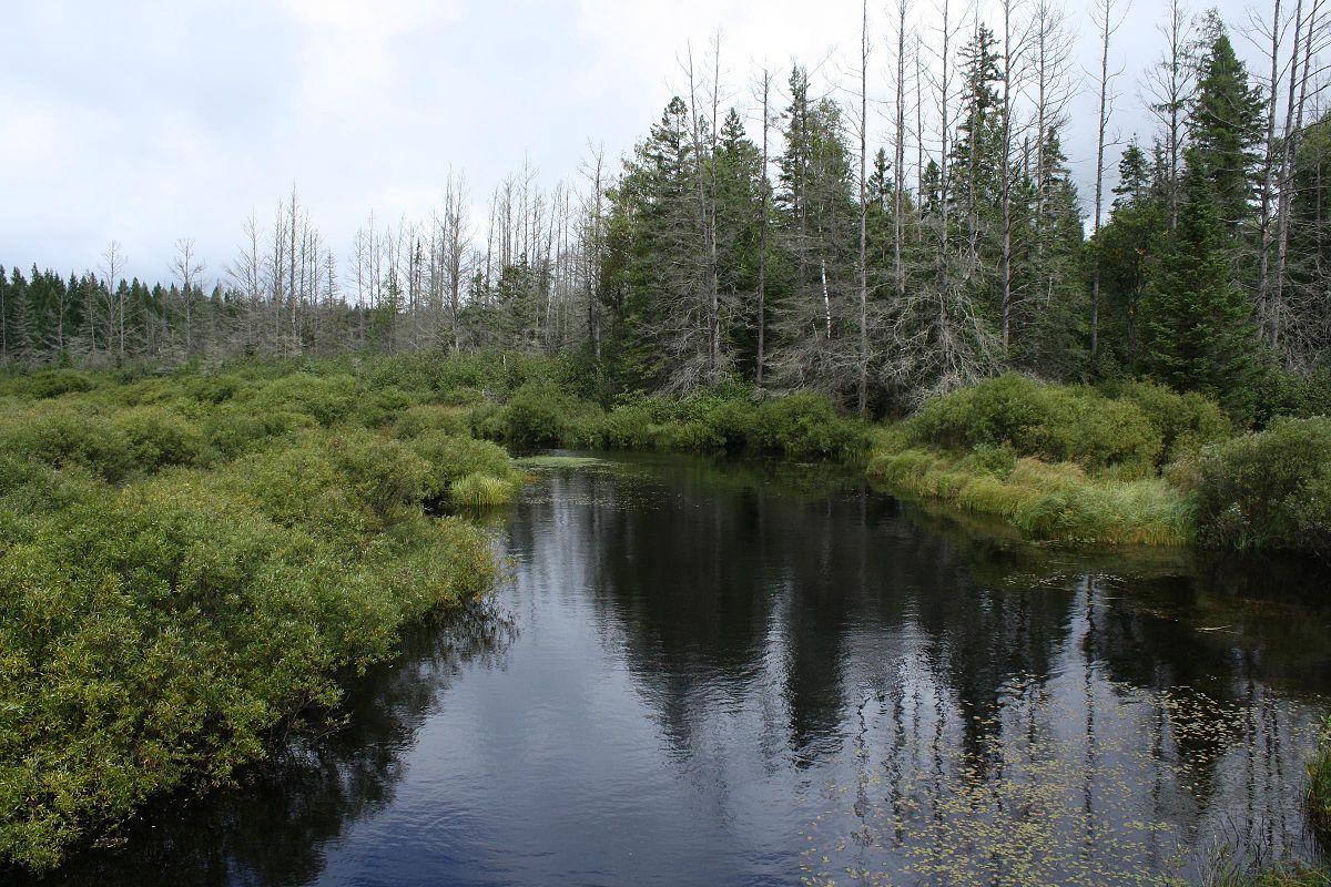 Headwaters Wilderness Wikipedia