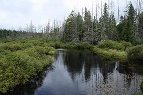 Headwaters Wilderness.jpg