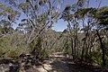 Heathcote NSW 2233, Australia - panoramio (56).jpg