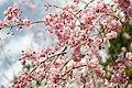 Heian Shrine (5766625459).jpg