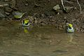 Hermit Warbler & Nashville Warbler - Rye Springs (7848218920).jpg