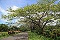 Hibiscus Drive, Pacific Harbour, Fiji - panoramio - catlin.wolfard.jpg