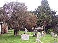Holly Tree - geograph.org.uk - 300078.jpg