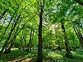 Holming Wood, Old Holbrook, Horsham HQ.jpg