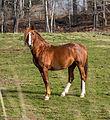 Horse (8272800419).jpg