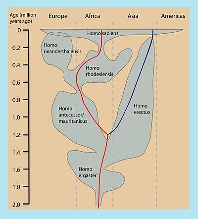 Radiometrische datering menselijke fossielen