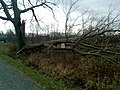 Hurricane Sandy caused damage to Great Swamp National Wildlife Refuge (NJ) (8142677827).jpg