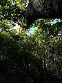 Hutan indonesia.jpg