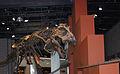 Ibaraki Nature Museum's Tyrannosaurus rex.jpg