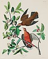 Illustration from Birds of America (1827) by John James Audubon, digitally enhanced by rawpixel-com 162.jpg