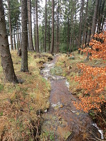 Ilsenburg Nationalpark-Harz Feb-2016 IMG 7330.JPG
