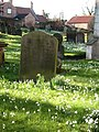 In a country churchyard - geograph.org.uk - 679549.jpg
