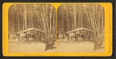 In the pineries of Minnesota, by Zimmerman, Charles A., 1844-1909.jpg