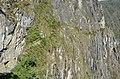 Inca Bridge and way - panoramio.jpg