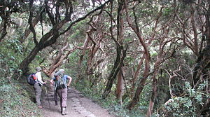 Inca Trail to Machu Picchu - Inca Trail cloud forest