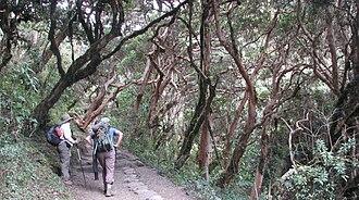 Inca Trail to Machu Picchu - Inca Trail cloud forest