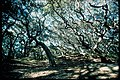 Inland forests at Cumberland Island National Seashore, Georgia (fba16690-3c06-4a40-aa22-6abcffc03ecd).jpg