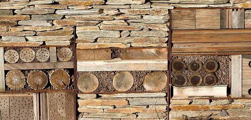 Insect Hotel Uk