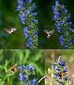 InsektCollage.jpg