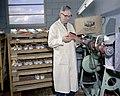 Inspecting shoes at Jaguar Shoes, Calgary, Alberta (34247763213).jpg