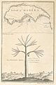 Island of Madera; The dragon tree.jpg