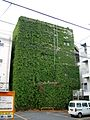 Ivy all over the wall (8685136924).jpg