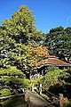 Japanese Tea Garden (San Francisco) - DSC00207.JPG