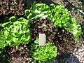 Jardin botanique Dijon 039.jpg