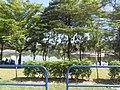 Jaya Park Lake.jpg