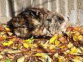Jesienny kot.jpg
