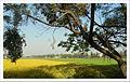Joggers park, Agriculture farm.jpg
