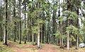 Jyväskylä - forest in Haukkamäki.jpg