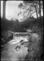 Kaikorai Stream, Dunedin. ATLIB 295725.png