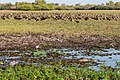 Kakadu (AU), Kakadu National Park, Yellow Water -- 2019 -- 3968.jpg