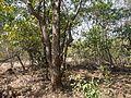 Kannu Pade (Kannada- ಕಣ್ಣು ಪಡೆ) (4304192042).jpg