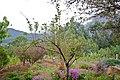 Kanthalloor Apple Farm.jpg