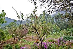 Kanthalloor - Apple farm at Kanthalloor