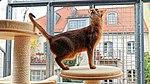 Katzenauslauf auf der Terrasse 02.jpg